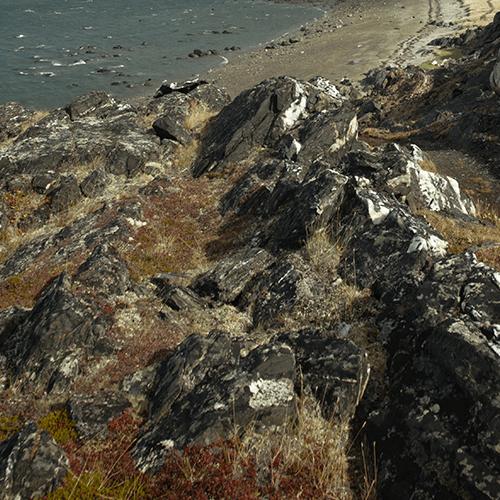 Série de photographies représentant l'environnement du site Qajartalik : mer, végétation, algues et rocher