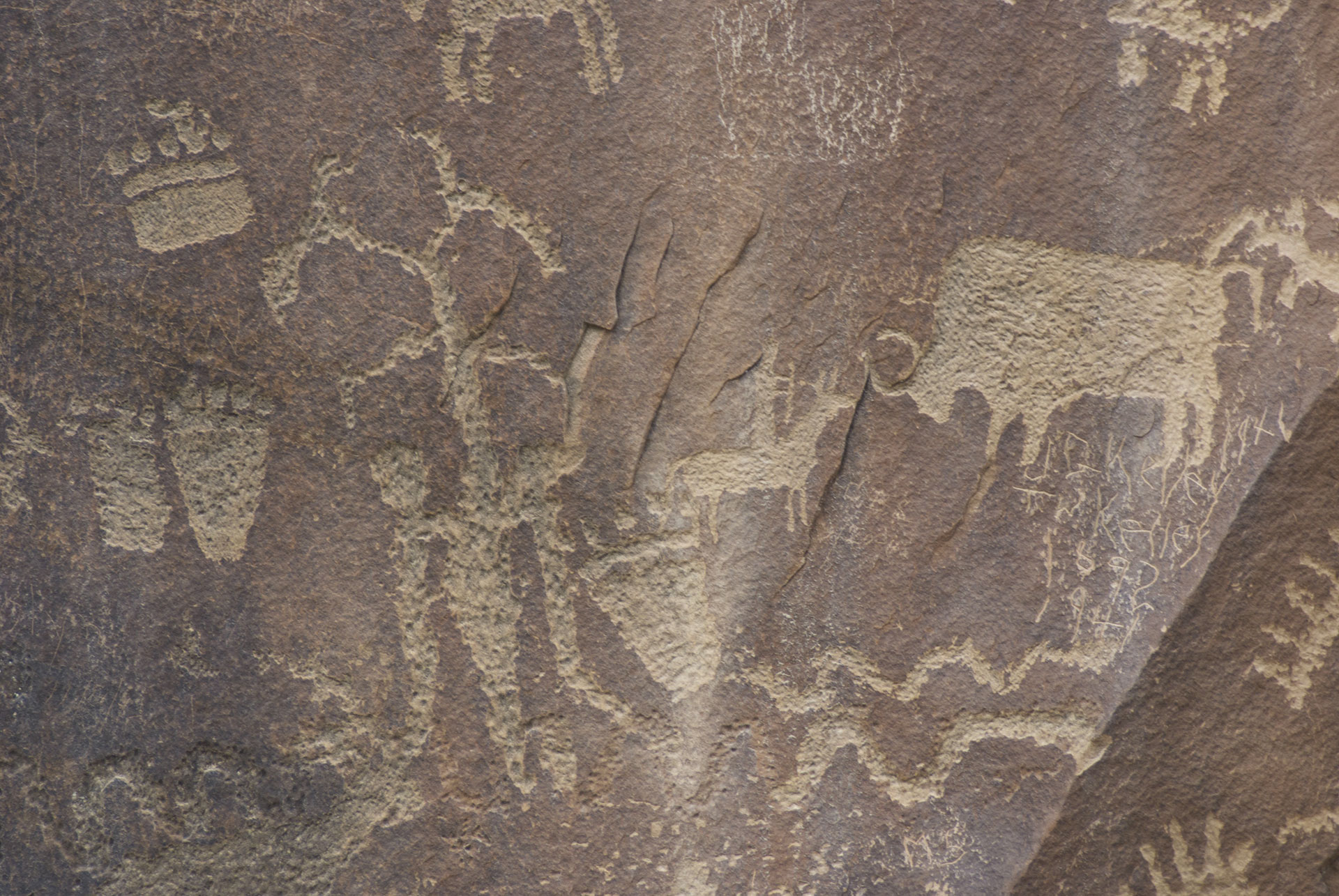 Picture of various motifs: paw prints (bear?), a phytomorph, a hunter riding a horse, a buffalo and two snakes. Newspaper Rock, Utah.