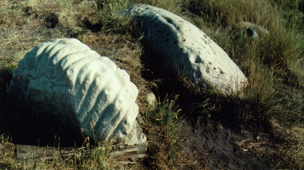 Ribstones near Viking in Alberta. Engraved lines evoke the spine and ribs of a bison.
